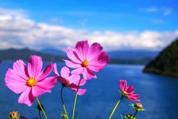 泸沽湖旅游攻略,一篇攻略就可以自由行玩转泸沽湖